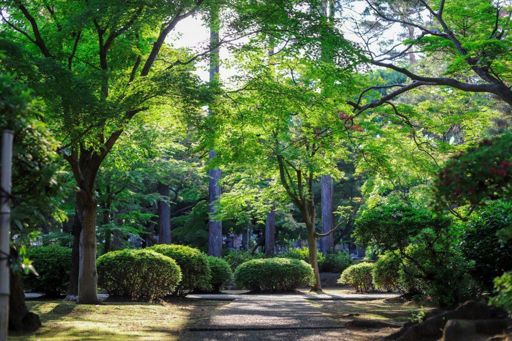grünanlagenpflege-garten